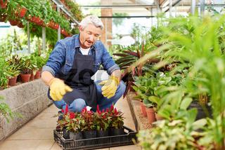 Gärtner arbeitet im Gartencenter