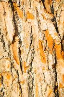 Bright sunlit bark