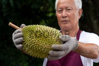Farmer and musang king durian