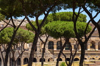 View of arches of Colosseum through Pine trees