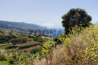 Lush vegetation at coast of La Palma
