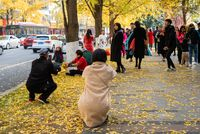 People taking photos of yellow leaves on gingko trees by Jinjiang river in Jinli ZhongLu street in Autumn.