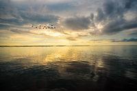Birds flying during the sunrise over Songkhla Lake, Thailand