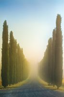 Idyllic Tuscan landscape with cypress alley at sunrise near Pienza