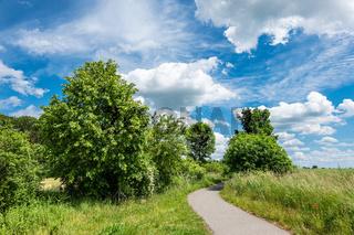 Feld mit Bäumen in der Nähe von Rostock