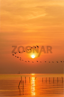 Seagulls flying in a line through the sun at sunset
