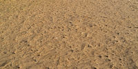 the texture of the sand with buds in autumn.