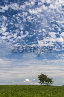 Baum vor Wolkenhimmel