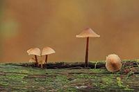 Pilze auf einem Ast