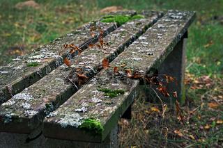 alte Holzbank im Herbst