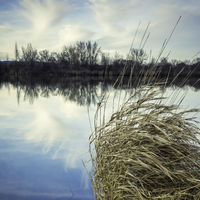 small lake with reflections and grass