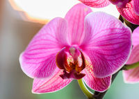 orchid highlighted with the light of the sun at sunset - very shallow depth of field - focus on a floral post