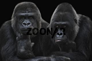 Gorilla-Mädels