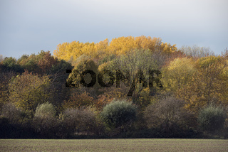 Herbstfarben... Waldrand  *Lank-Latum*, Blick in Richtung Latumer Bruch