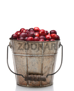 A bucket of fresh picked cranberries, isolated on white.