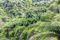 Farne im Rotorua Waimangu Volcanic Valley auf der Nordinsel in Neuseeland
