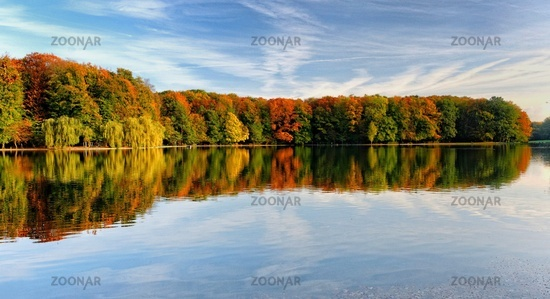 bunter Herbstwald an einem sonnigen Tag