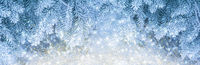 Beautiful fir tree covered snow, closeup. Winter Christmas greeting card panoramic background, copy space. Holiday spruce branches landscape, falling snowflakes. Nature panorama. Soft blue toned