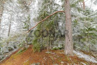 Beautiful serene winter forest landscape