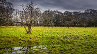 Twisted tree on the wet grassland on dark forest and stormy sky background