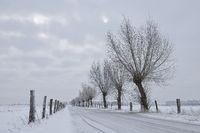 von Kopfweiden gesäumt... Bislicher Insel * Nordrhein-Westfalen * im Winter