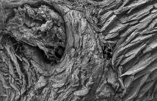 Strukturen einer Baumstammrinde