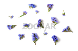 Buds of blue flowers. Mix of individual elements on a white background. Isolated.