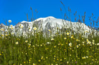 Schneebedeckter Hochgebirgskamm hinter dem Rasenstück einer Bergweide, Hochsavoyen, Frankreich