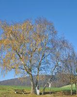 D-_Herbst im Sauerland.jpg