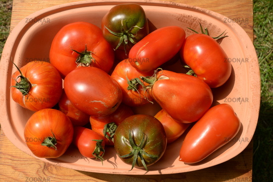 Schüssel mit verschiedenen Tomaten