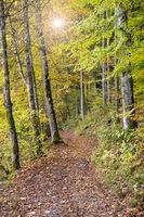 Herbst im Wald im Allgäu