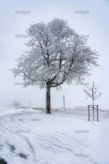 Winter landscape in the Erzgebirge