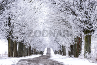 Allee im Winter in Masuren