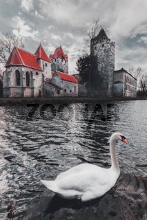 old park and Castle Pottendorf in Austria with a white swan