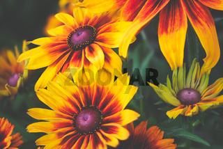 Colorful mixed flowers with lovely blossoms - natural cinematic edit