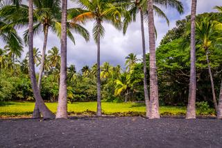 Palm trees at Punaluu Black Sand Beach on Big Island, Hawaii