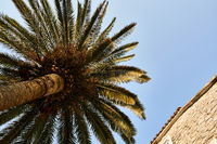 Palm tree and old stone house on sunny sky background