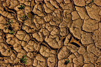 Cracked soil - earth global warming, drought
