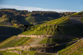 Weinberge bei Rech auf dem Rotweinwanderweg im Ahrtal