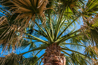 Big palm tree and blue sky in Turkey