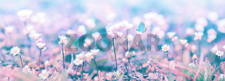 Beautiful micro wildflowers and butterfly in the dreamy meadow panorama. Delicate pink and blue colors pastel toned. Shallow depth macro panoramic background. Copy space. Nature floral springtime