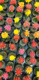 Abstract Overhead of Various Colorful Succulent Plants At Nursery