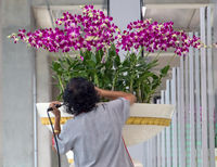 A woman cares about flowers in a large flower pot. Watering flowers in the airport hall.