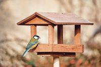 beautiful small bird great tit on bird feeder