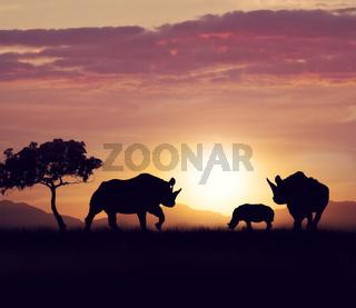 rhinoceros family at sunset