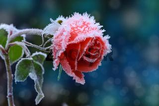 Blumen  976
