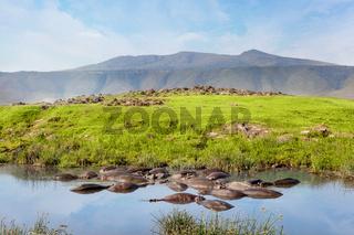 Hippo pool in serengeti national park. Savanna and safari.