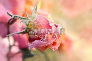 Blumen 253