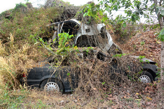 Automobile cemetery overgrown with shrubs