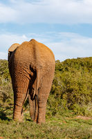 Elephant walking away to the bushes